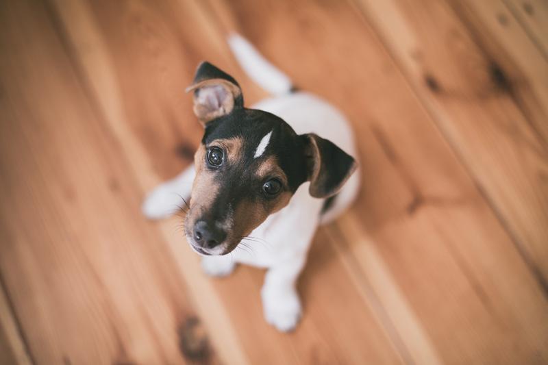 ¿Cómo le enseño a mi perro a ir al baño en un solo lugar?