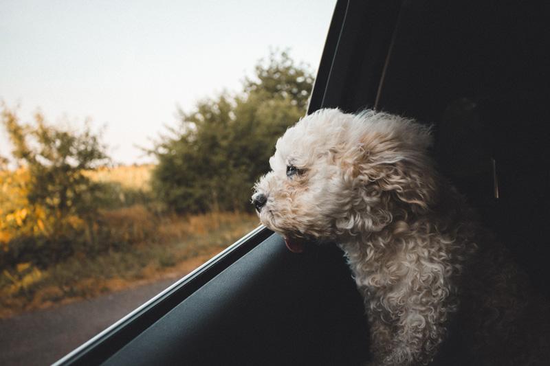 Consejos clave antes de salir de vacaciones con tu mascota