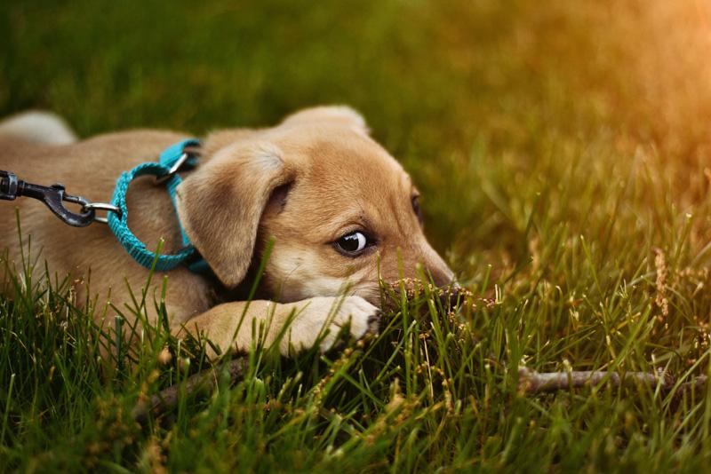 Juguetes para perros que fomentan la actividad mental
